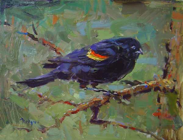 REDWINGED BLACKBIRD IN SPRING by Jim Rodgers - 11 x 14 in., o/b • $2,300